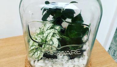 Upcycling terrarium 4